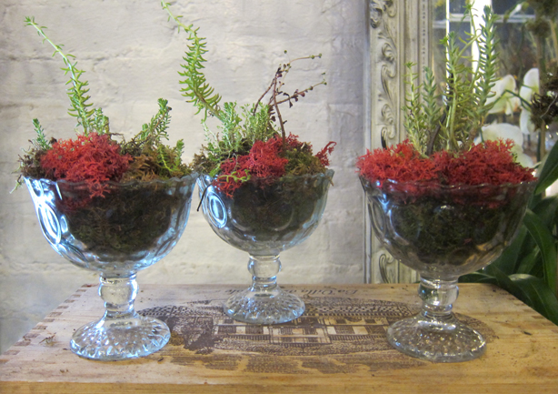 Indoor Plant Decor The Design Stylebook For Houseplants
