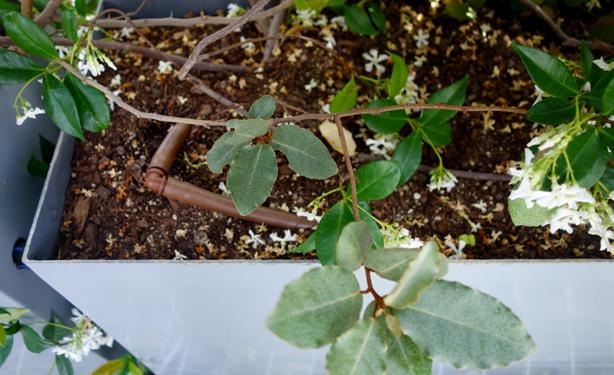 green-side-wall-jardi-tarradellas-drip-irrigation-tubes-in-planter-urbangardensweb