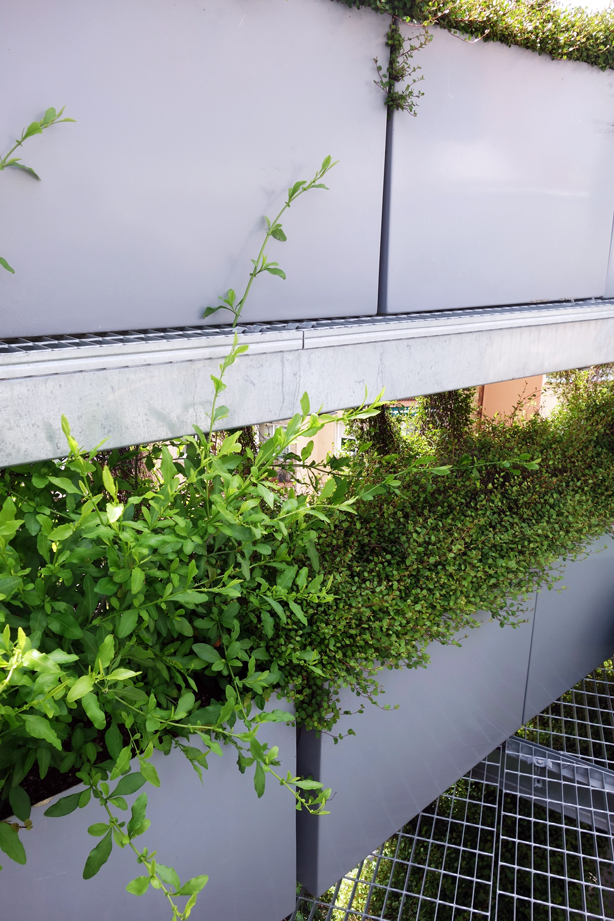 green-side-wall-jardi-tarradellas-two-balconies-urbangardensweb