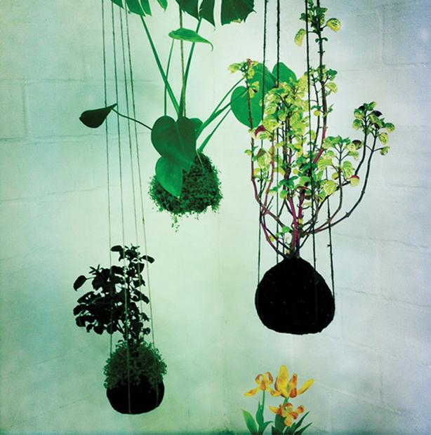 opus-studio-kokedama-hanging-gardens