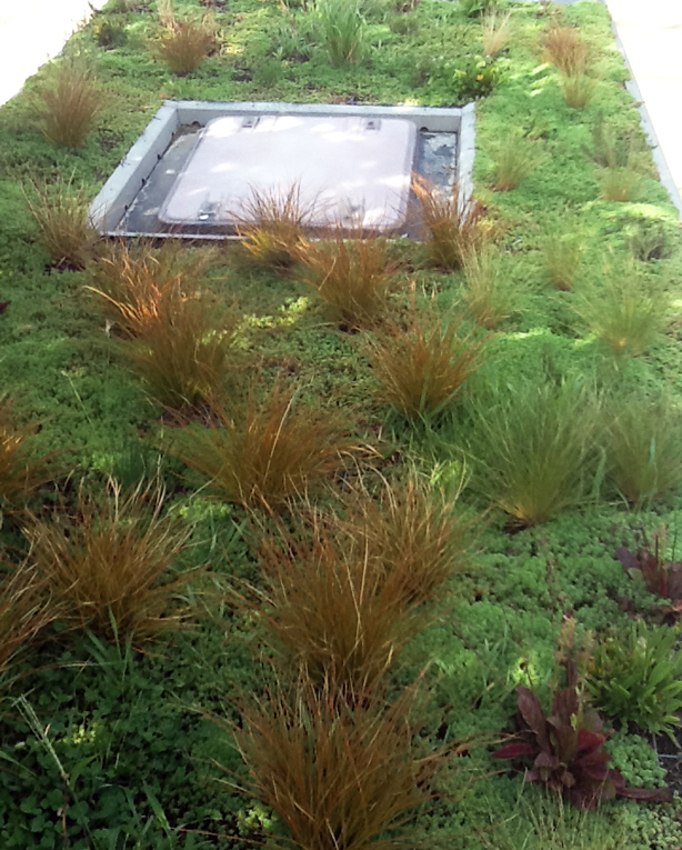Phytokinetic Lightweight Green Roof System For City Buses
