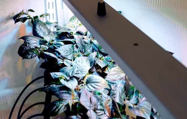 bulbo-plants4