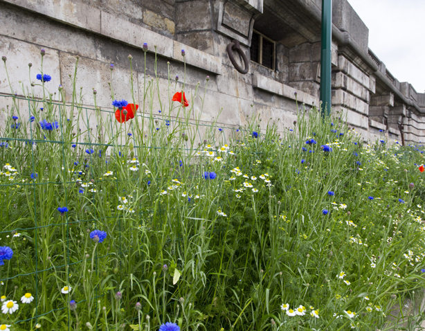 fleurs-fonds-du-quai-marie-de-paris