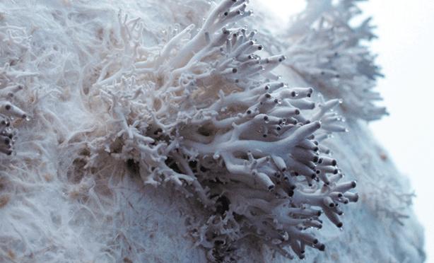 new-edible-textile-material-grows-from-mushrooms-urbangardensweb