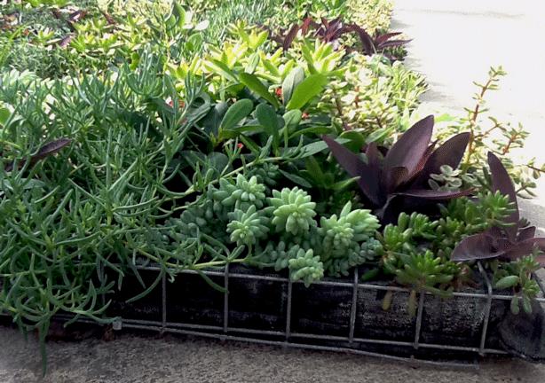vertical-succulent-garden-modular-panels-planted-urbangardensweb