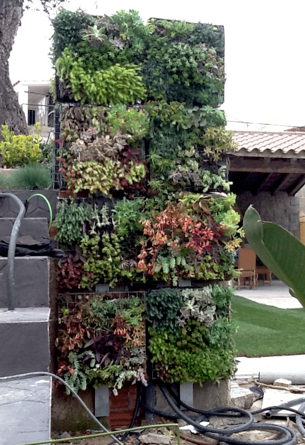Vertical Succulent Garden With Integrated Outdoor Shower
