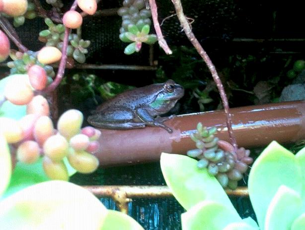 vertical-succulent-garden-outdoor-shower-with-frog-urbangardensweb