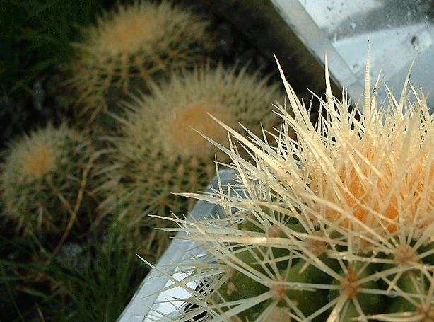 heywood-condie-split-horticultural-installation-art-urbangardensweb
