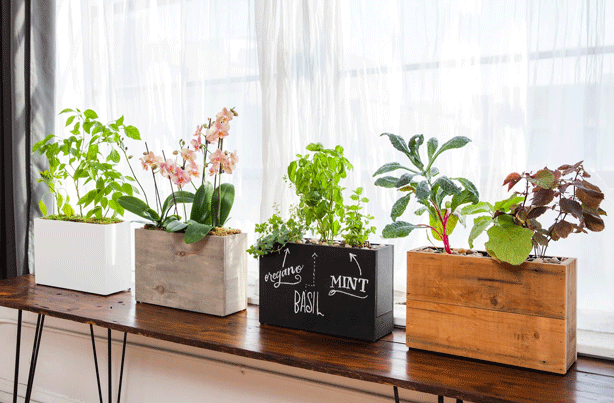 ModernSprout_hydroponic-planters-collection
