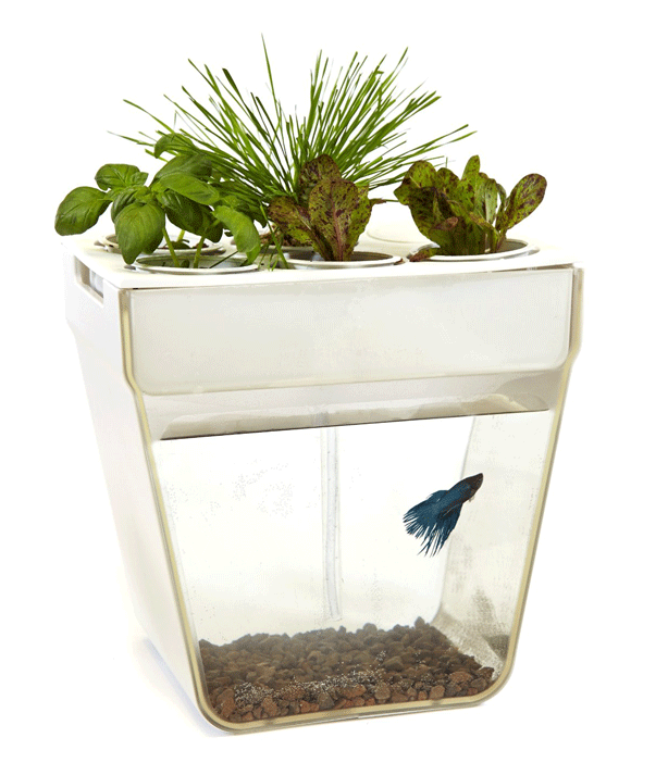 back-to-roots-aquaponic-planter-614