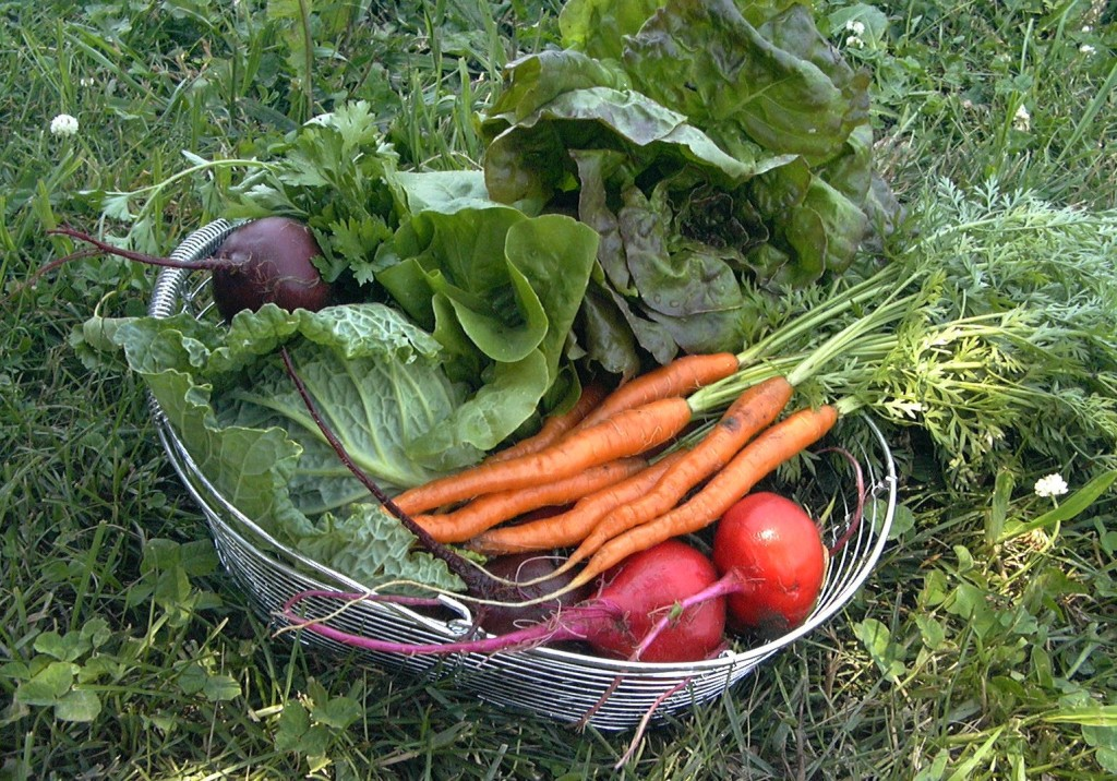 rrejuvinate-your-urban-garden-with-by-planting-vegetables
