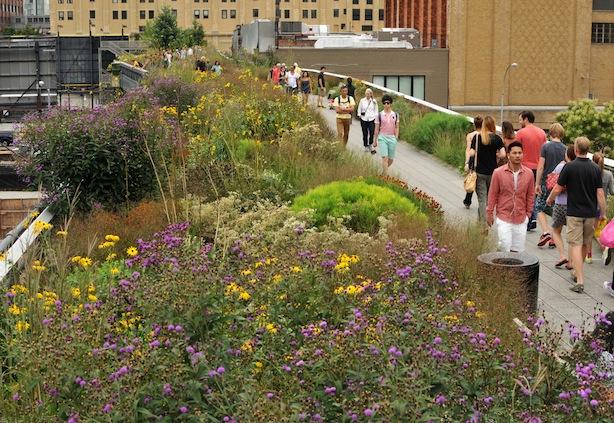 High Line Plants Path People Steven Severinghaus
