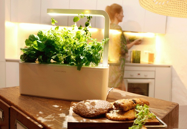 Modern Indoor Herb Garden