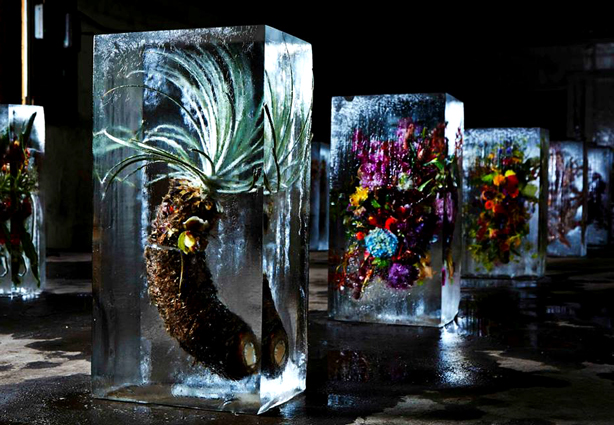 iced-flowers-makoto-azuma-botanicals-urbangardensweb