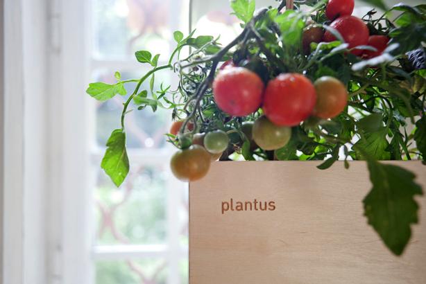 plantus-wood-planter