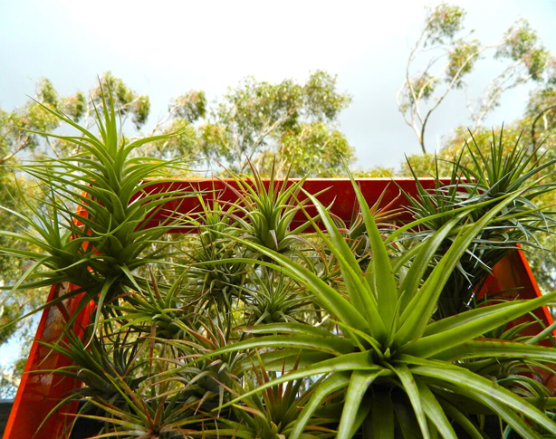 airplantman-ray-kappe-house-solar-panel-plants