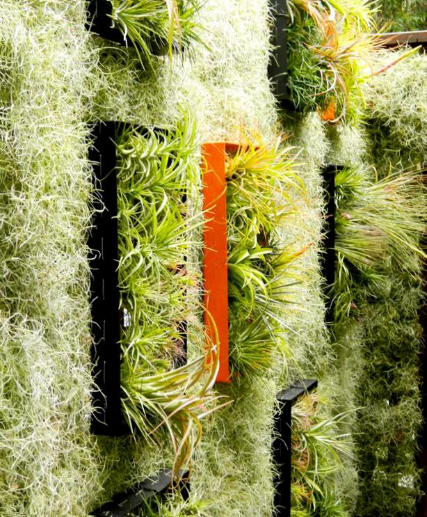 airplantman-solar-panel-green-wall-plantings