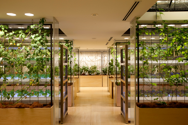 pasona-indoor-urban-farm-vertical-farming-urbangardensweb