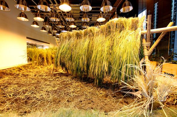 pasona-rice=paddy5-urbangardensweb