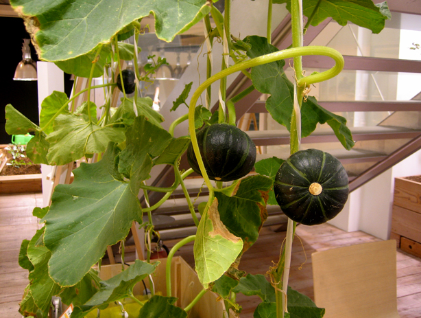 pasona-urban-farm-vegetables-urbangardensweb