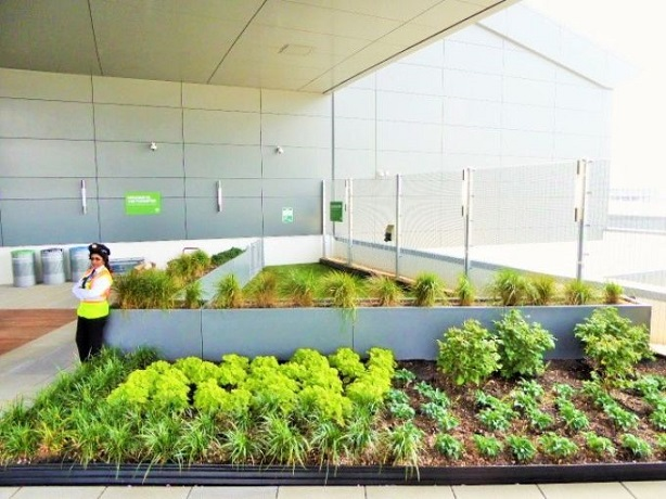 635713469559282388-JFK-JetBlue-Rooftop-lounge---landscaping-and-beyond-that-the-Wooftop-dog-walk