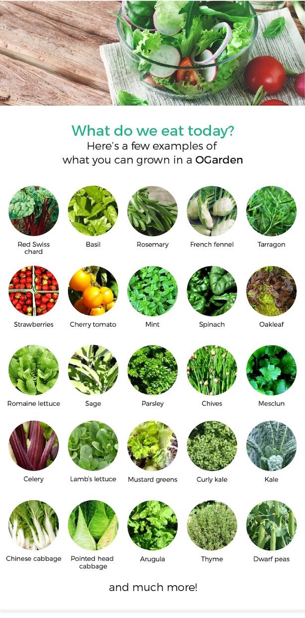 ogarden-produce