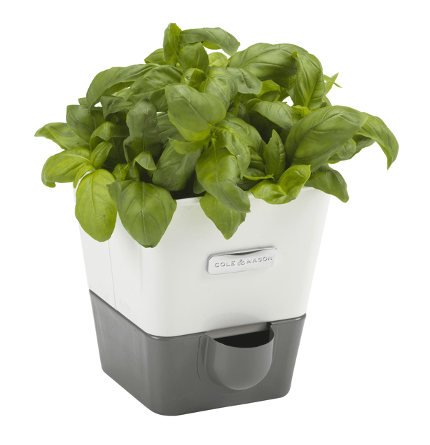 Cole-and-Mason-Indoor-Herb-Garden-Self-Watering-Carbon-Steel-Pot-Planter-urbangardensweb