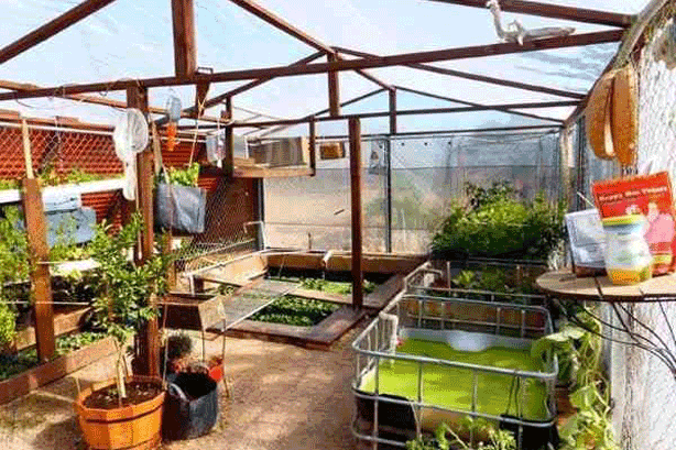 An Empty Swimming Pool Transformed Into, How To Turn Your Basement Into A Greenhouse