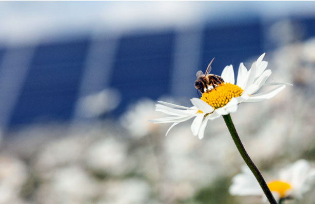 largest solar farm apiary in America with 48 hives and pollinator arrays
