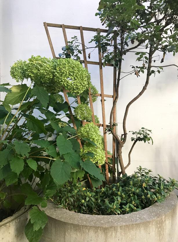 trellis_London_secret_garden_urbangardensweb