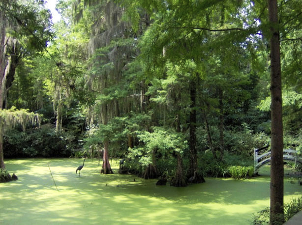 Magnolia Plantation and Gardens Swamp Tour