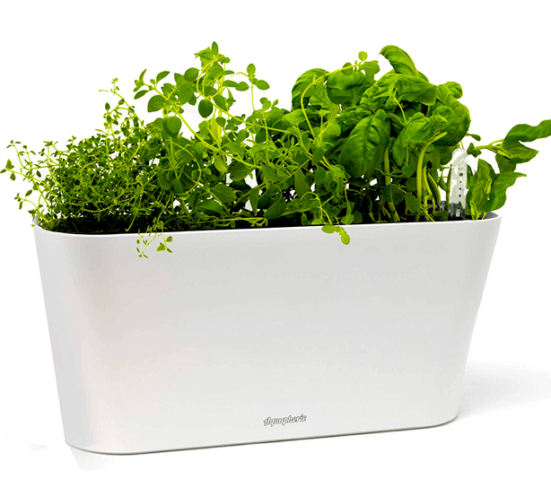 urban-gardens_mothers-day-gifts-for gardeners_aquaphoric_passive_hydroponic_indoor_planter
