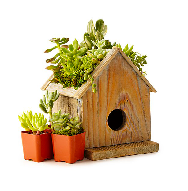urban-gardens_mothers-day-gifts-for gardeners_succulent_green_roof_birdhouse _planter_kit