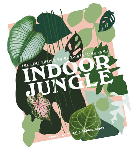 Leaf Supply Creating Your Indoor Jungle Book