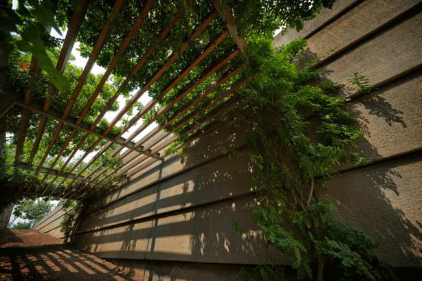 Mexico City Botanical Gardens at Vasconcelos Library, Alberto Kalach