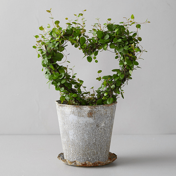 heart shaped vine topiary