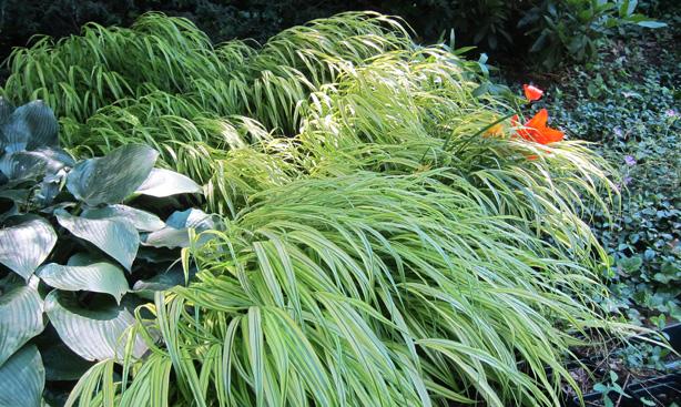 hostas-ornamental-grasses_lawn_alternatives