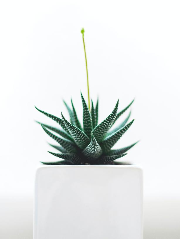 indoor-potted-plants-biophilic-worksplace