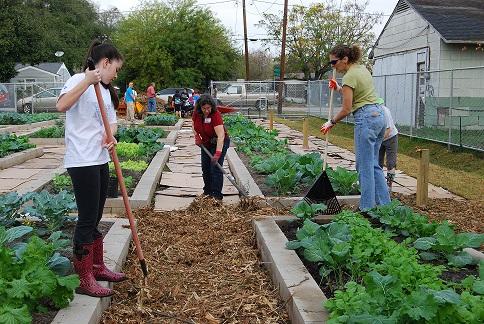 Healthy Soils * Healthy Plants * Healthy Animals * Healthy People * Healthy World