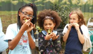 Urban Harvest Celebrates 15 Years of Youth Education in School Gardens!
