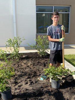 Planting blackberries and blueberries