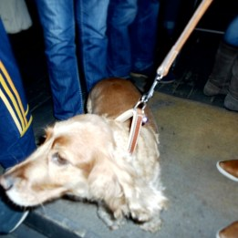 konrad's dog friendly