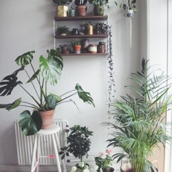 Urban Jungle Bloggers: Show your Plant Gang