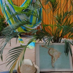 Urban Jungle Bloggers in June 2016: 1 Plant 3 Stylings