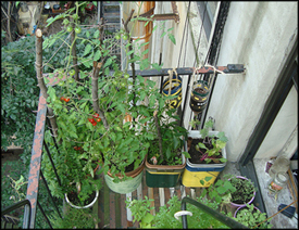 Live In An Apartment And Want To Grow Your Own Vegetable Garden