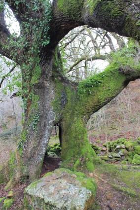 Chêne centenaire, Pays basque - Ur eta Lur, Canyoning, Spéléo et Randonnée