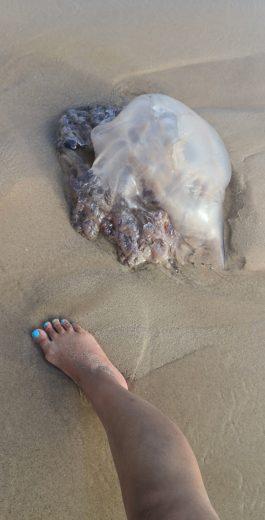 Qualle am Strand