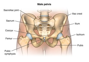 Facts About the Spine, Shoulder, and Pelvis  Health