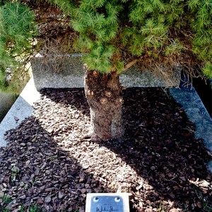 Wasserstein auf Erdgrab / Waterstone planted on existing grave