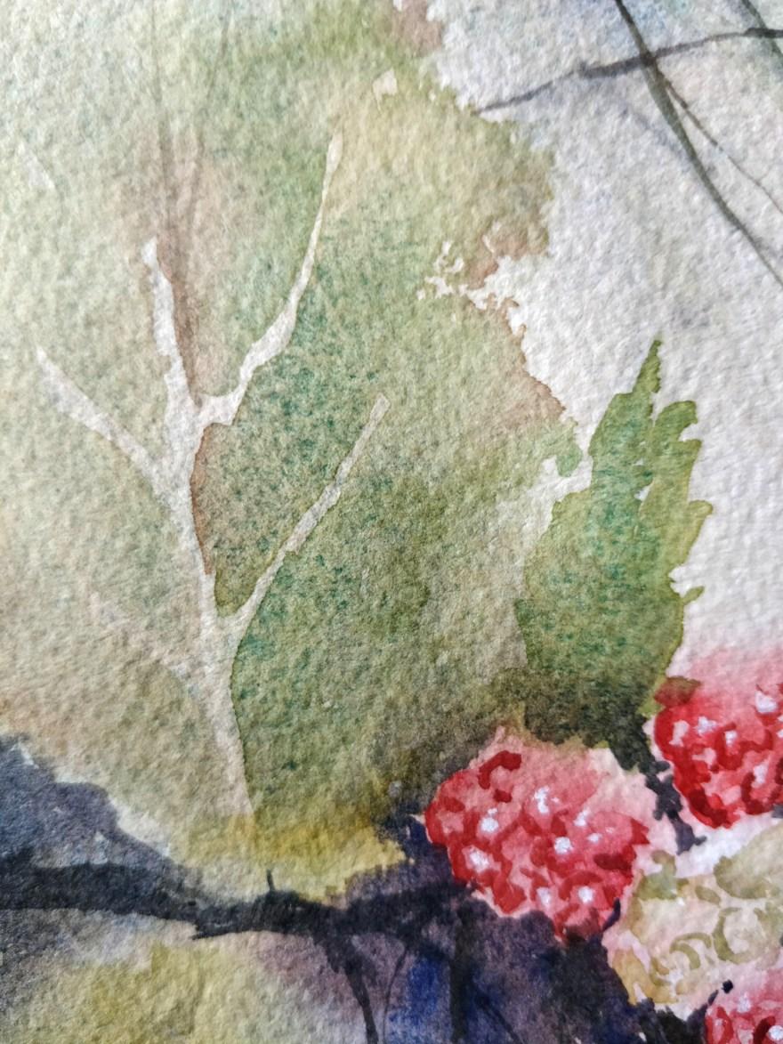 Framboise à l'aquarelle - détail